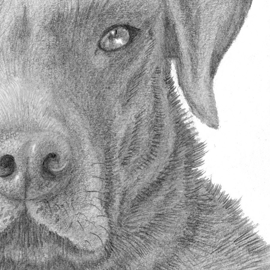 drawings of creatures realistic animal drawings xcitefunnet creatures of drawings