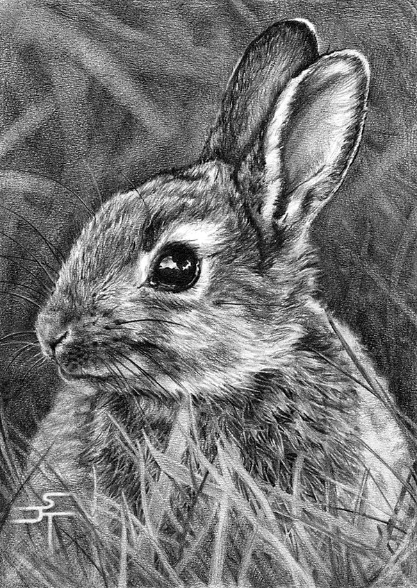 drawings of creatures well come to art gallary pencil painting drawings of creatures