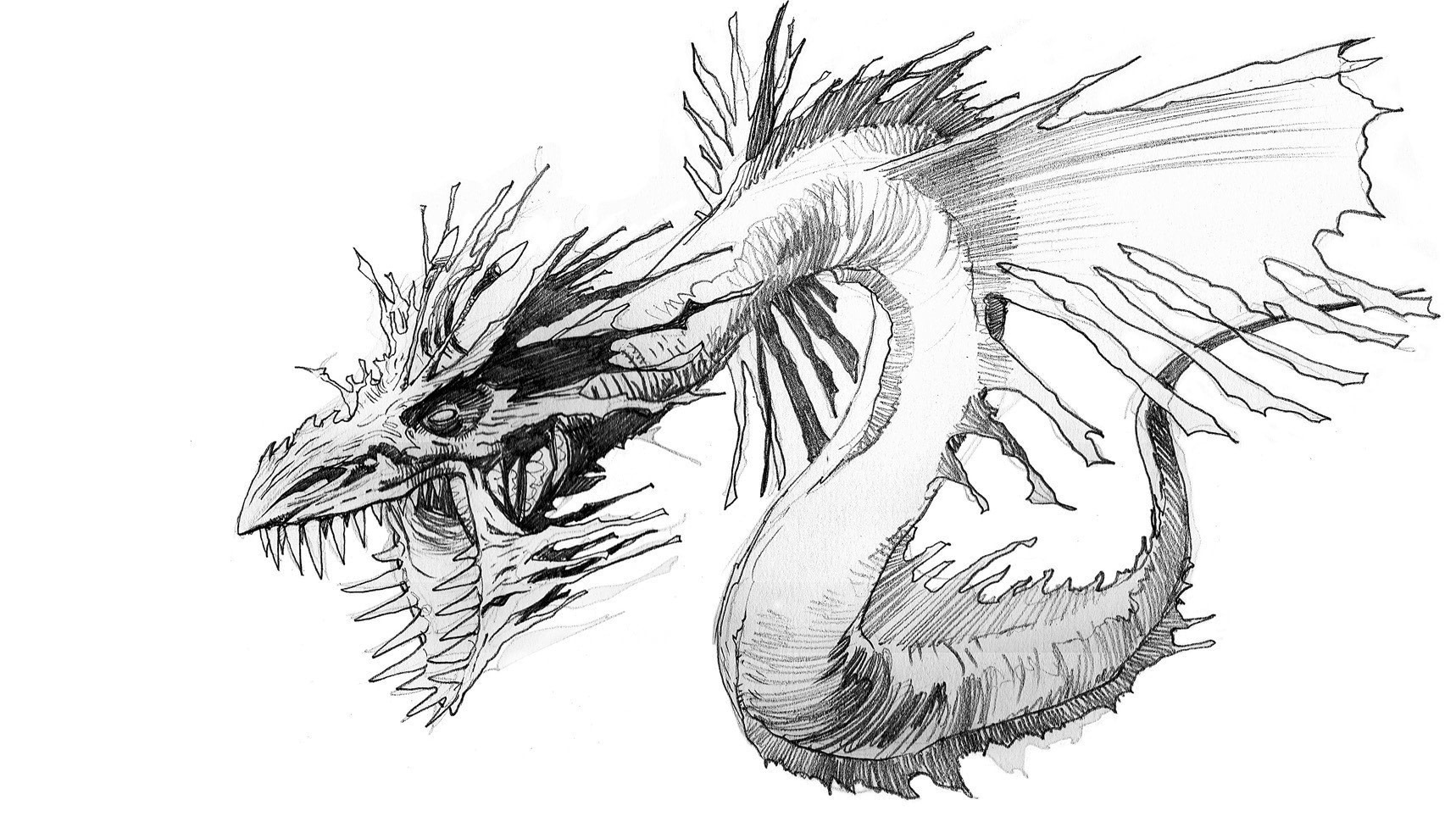 drawings of creatures wild animal drawings on behance drawings creatures of