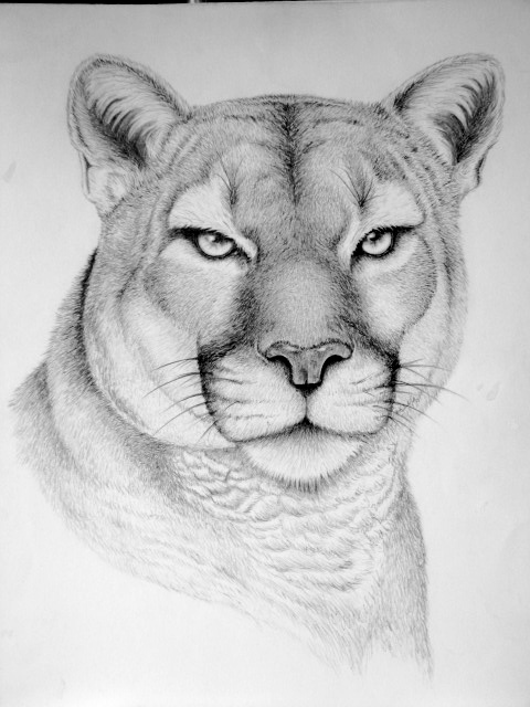 drawings of creatures wild animal drawings on behance drawings creatures of 1 1