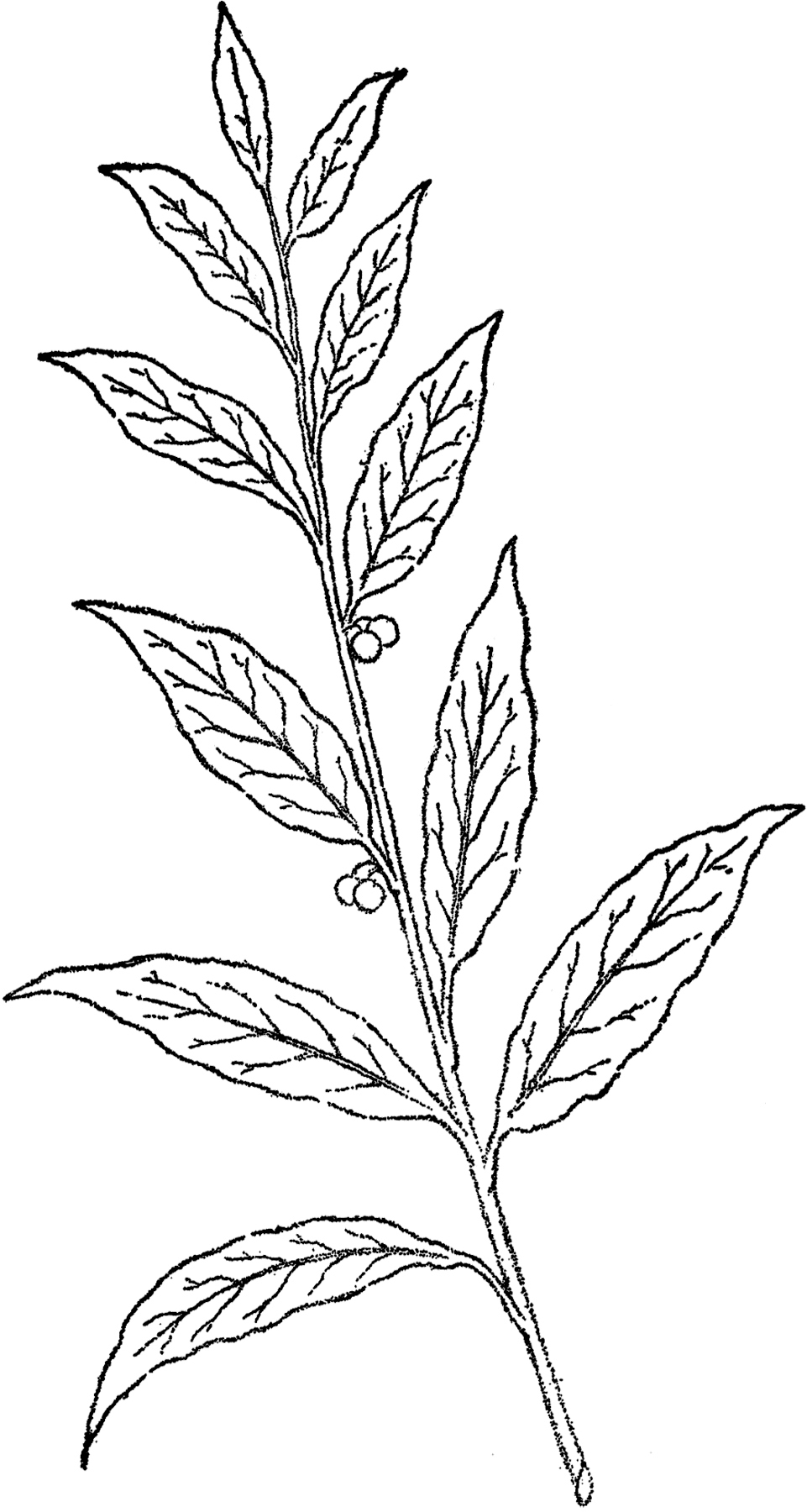 drawings of plants 1001 ideas and tutorials for easy flowers to draw pictures drawings plants of