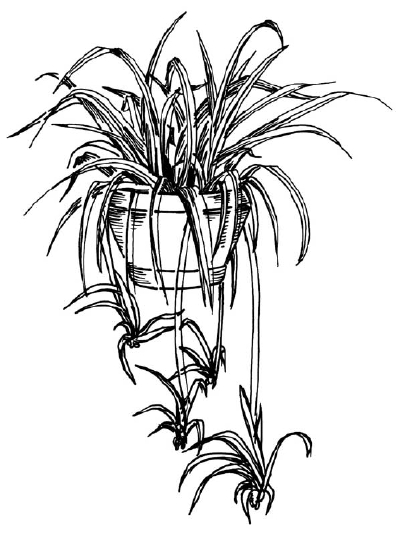 drawings of plants black and white vegetable garden clipart 20 free cliparts drawings of plants