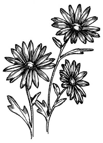 drawings of plants collection set of flower drawing illustration download of drawings plants