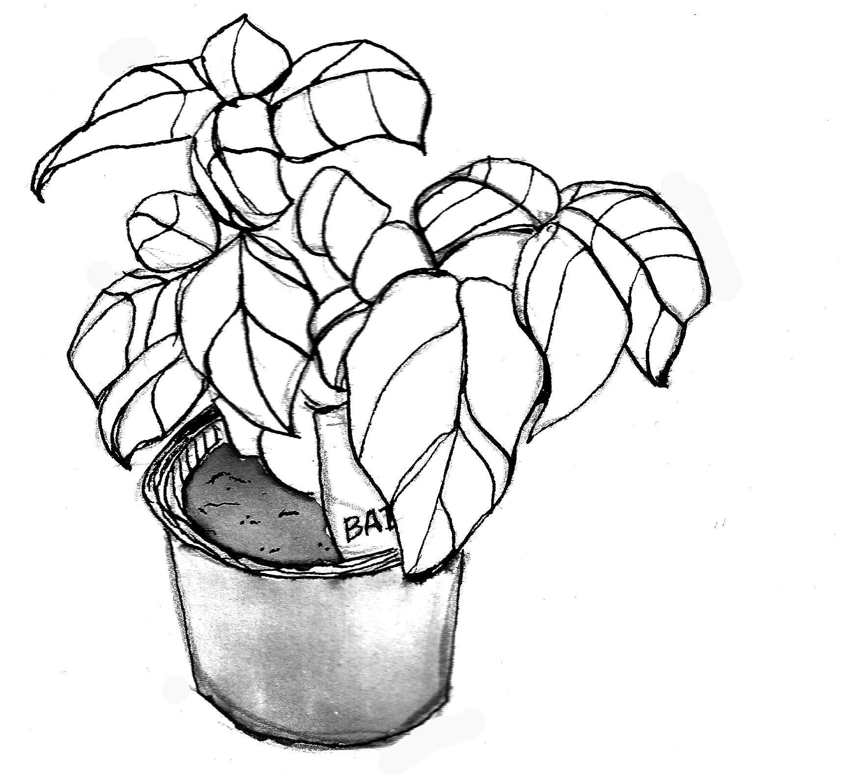 drawings of plants free images bunch bundle of flower bouquet black and drawings of plants