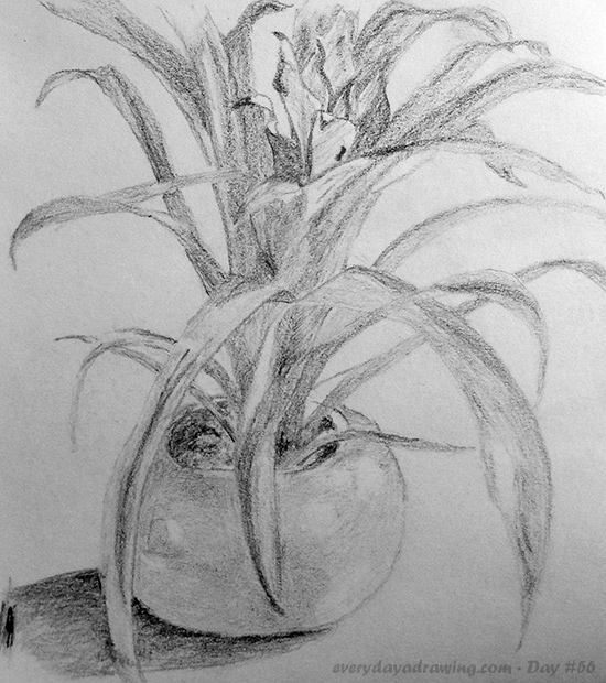 drawings of plants how to draw a daisy howstuffworks of drawings plants