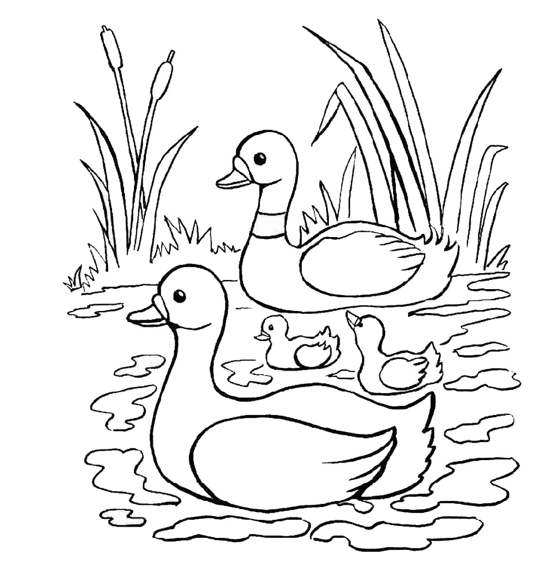Duck coloring pictures