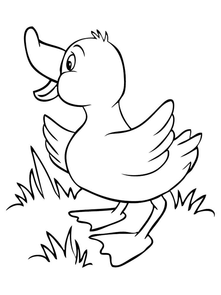 duck coloring pictures printable duck coloring pages for kids coloring pictures duck