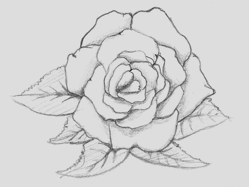 easy cute rose coloring pages free rose flower drawing download free clip art free rose pages cute easy coloring