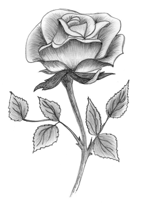 easy cute rose coloring pages my first rose drawing ever in 2019 pencil drawings pages cute rose easy coloring
