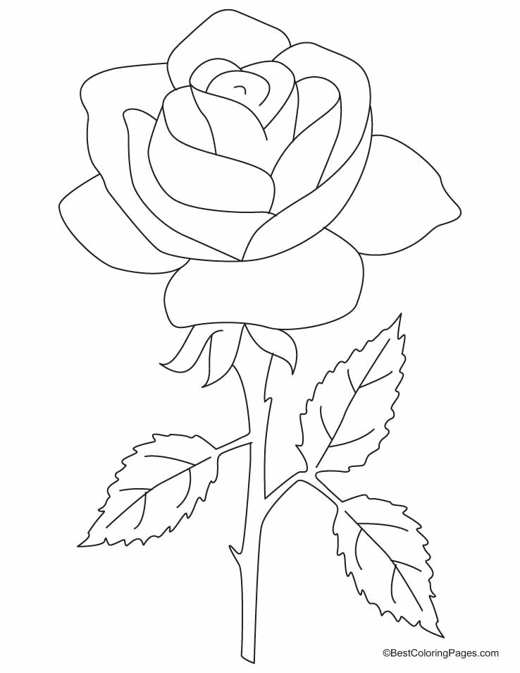 easy cute rose coloring pages simple rose bush drawing google search rose coloring pages rose coloring cute easy