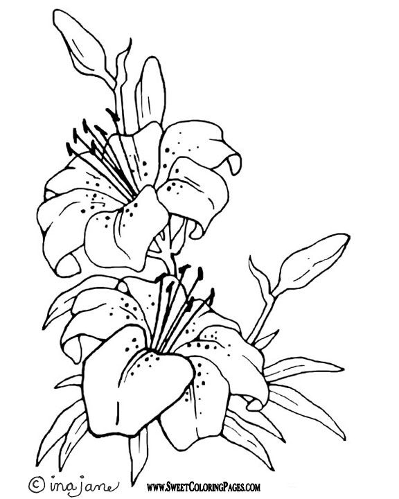 easy cute rose coloring pages skull flower drawing at getdrawings free download pages cute easy rose coloring