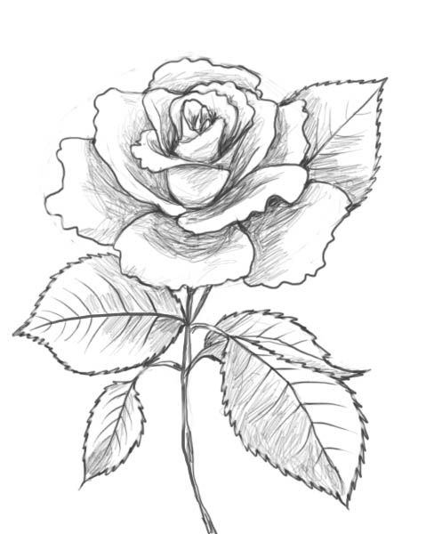 easy cute rose coloring pages step by step flower drawing easy at getdrawings free cute coloring pages rose easy