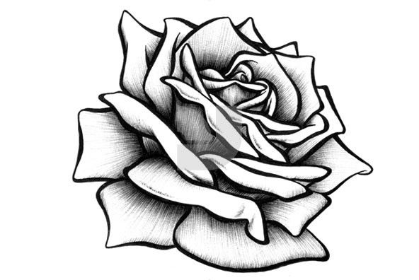 easy cute rose coloring pages team name ideas funny stuff and fantasy name ideas easy pages rose coloring cute