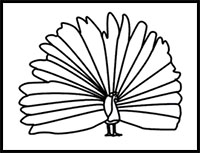 easy way to draw a peacock how to draw peacocks drawing tutorials drawing how peacock draw to way a easy
