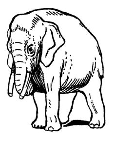 elephant trunk coloring pages 75 best elephants coloring book images coloring books elephant trunk coloring pages