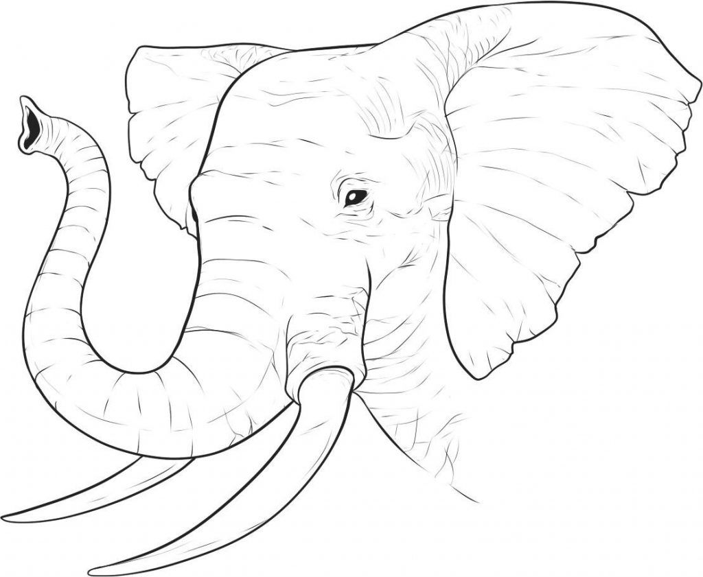 elephant trunk coloring pages cyrano trunk troubles elephant character design coloring coloring pages elephant trunk