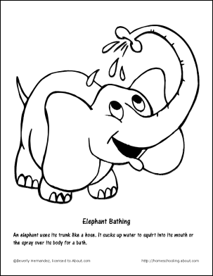 elephant trunk coloring pages elephant drawing trunk up at getdrawings free download coloring elephant pages trunk