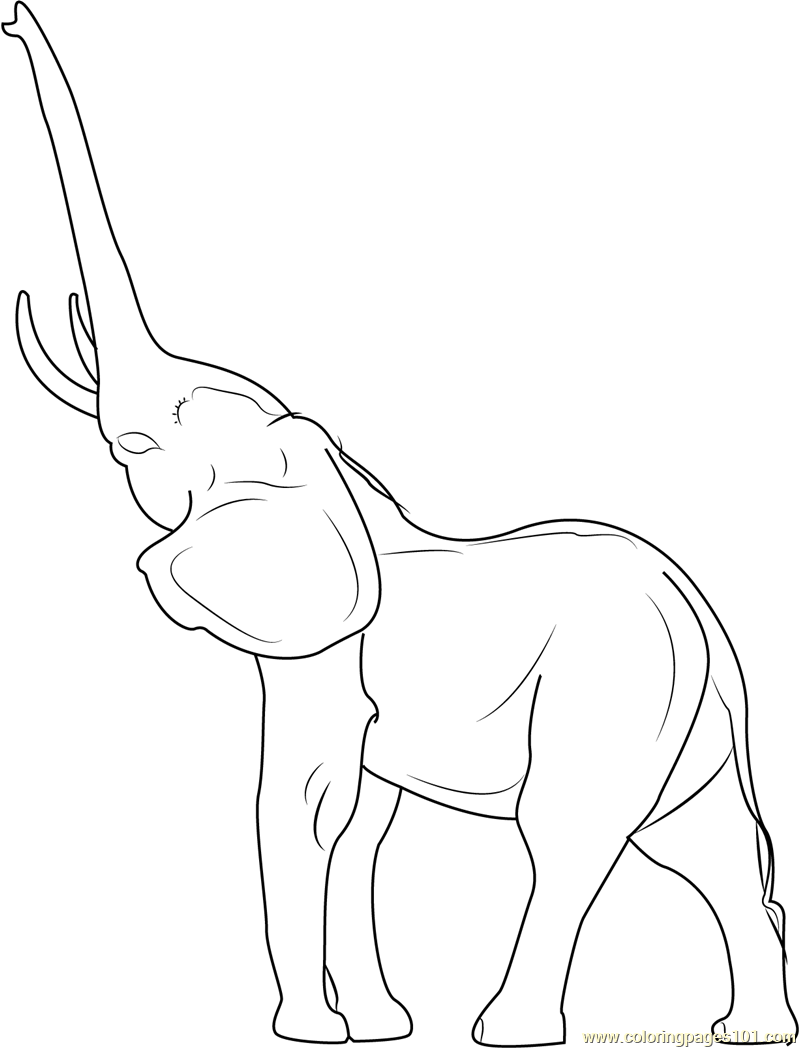 elephant trunk coloring pages elephant trunk up coloring pages coloring trunk pages elephant