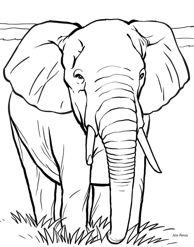 elephant trunk coloring pages elephant trunk up drawing at getdrawings free download trunk pages elephant coloring
