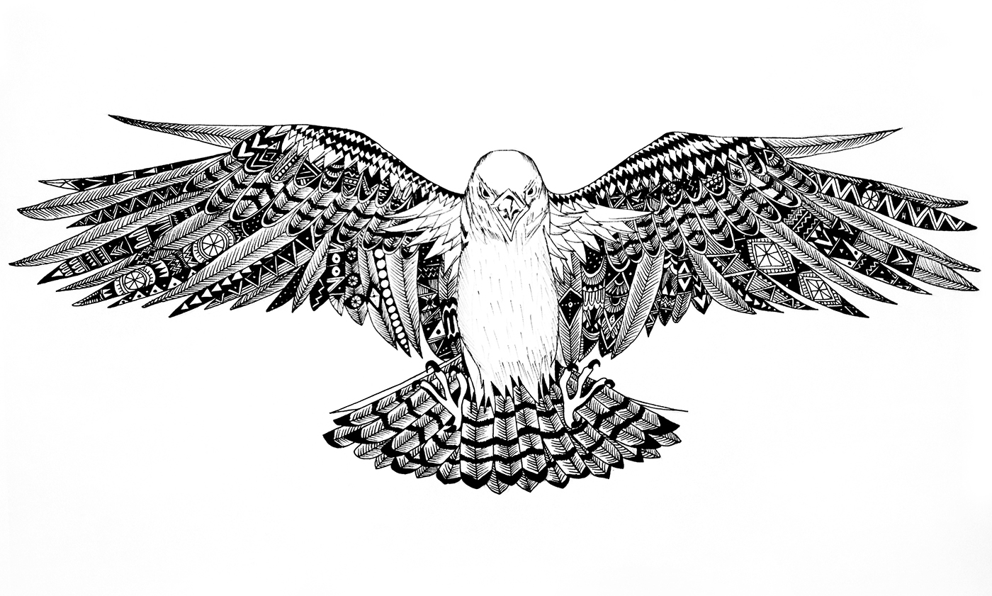 falcon drawings gyr falcon pencil drawing gary henderson pencil drawings falcon