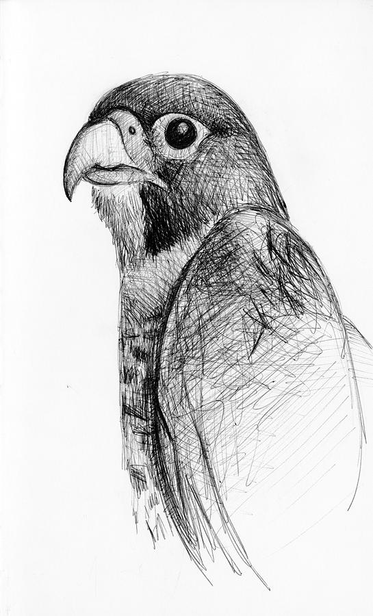 falcon drawings peregrine falcon by lost nomad07 on deviantart falcon drawings