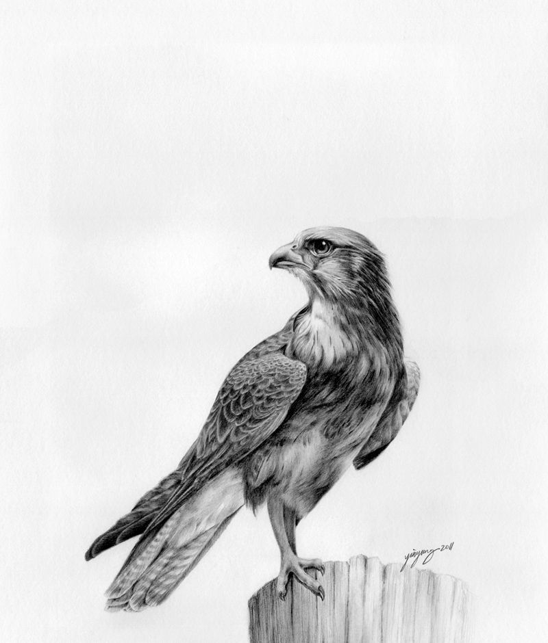 falcon drawings peregrine falcon by unusualworlds falcon drawing falcon falcon drawings