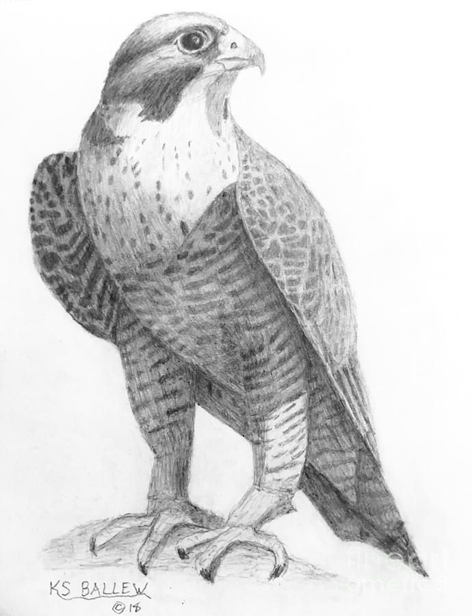 falcon drawings peregrine falcon drawing tatoo falcon drawings