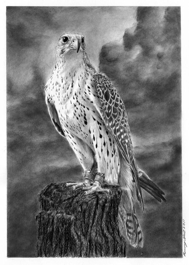 falcon drawings peregrine falcon pencil drawing by james parker drawings falcon
