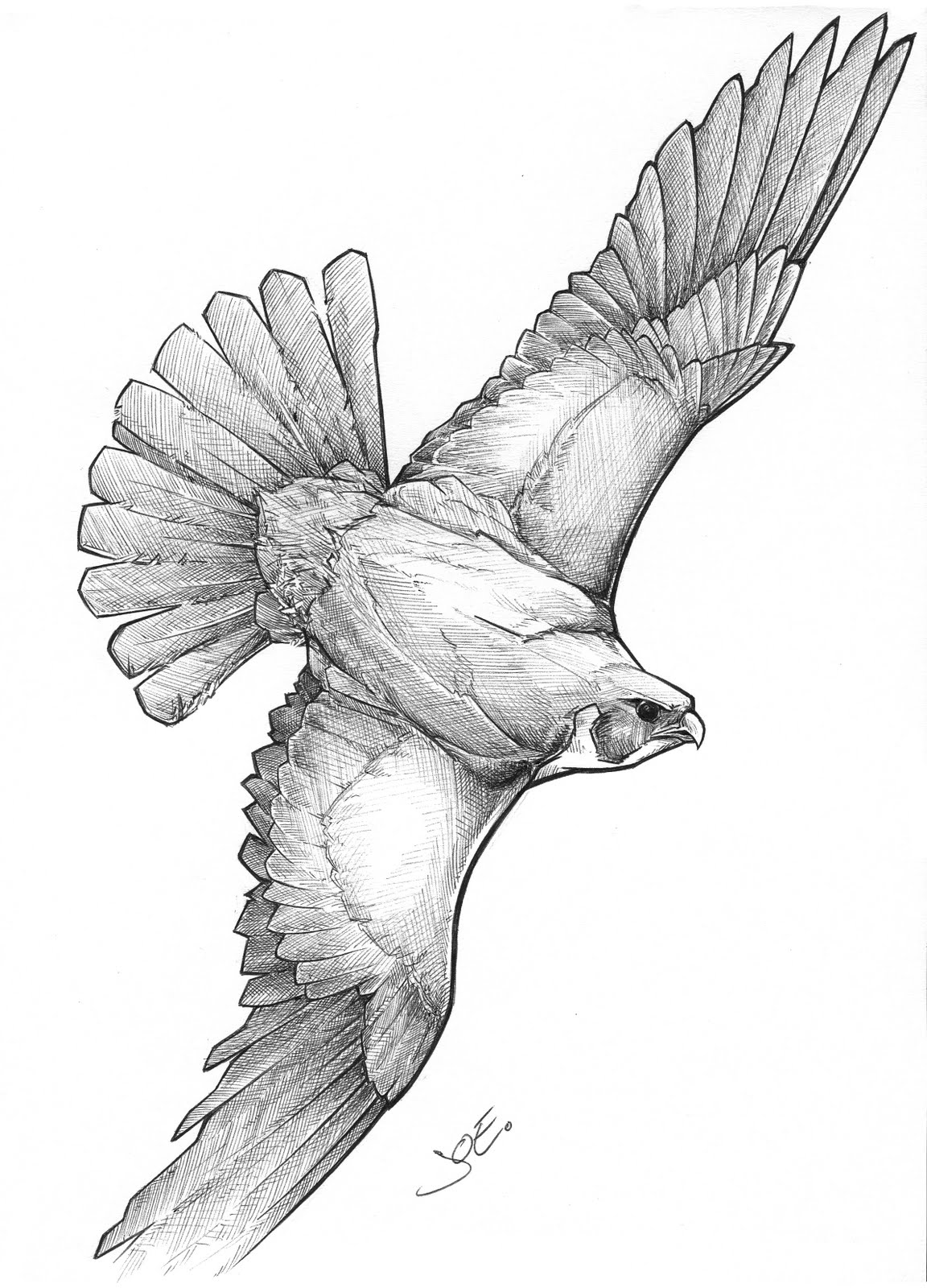 falcon drawings quotfantasy falcon bic biro pen ink drawingquot by dan forder drawings falcon