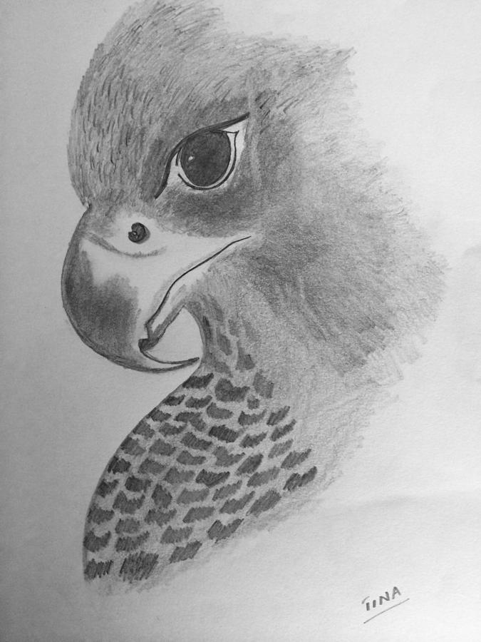 falcon drawings the falcon by gabrielauditore on deviantart falcon drawings