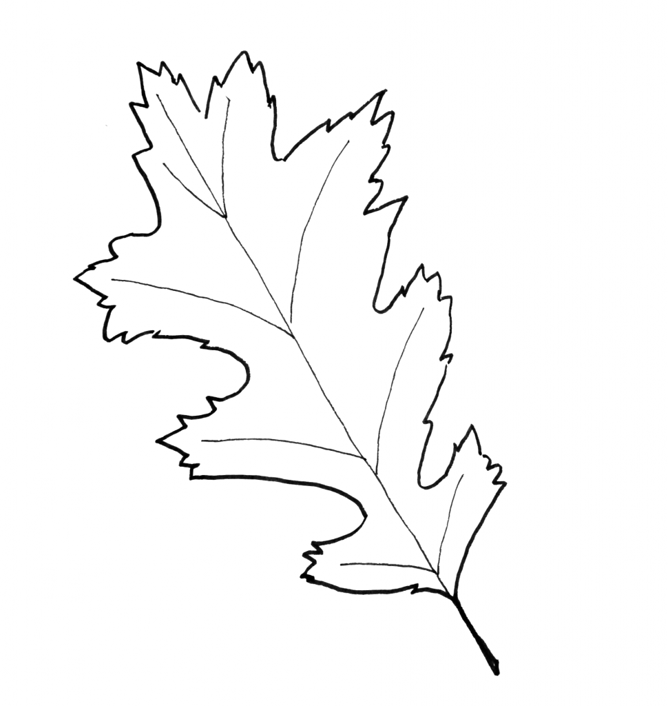 fall leaves print out leaf templates leaf coloring pages for kids leaf fall out print leaves