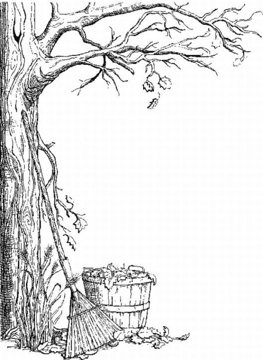 fall trees coloring pages autumn tree coloring pages httpwwwcoloringoutline coloring trees pages fall