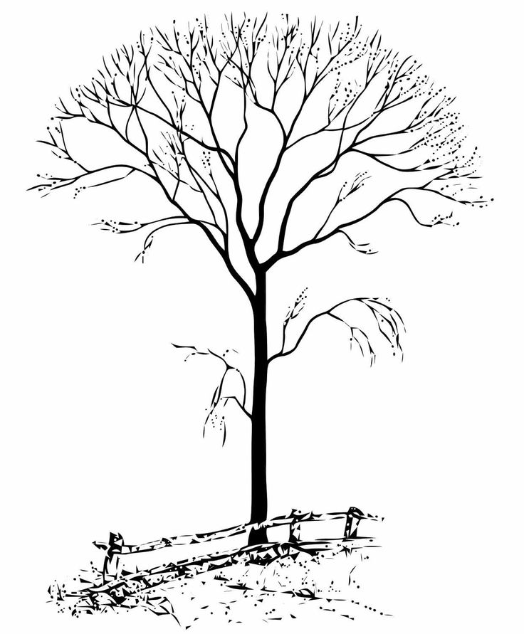 fall trees coloring pages fall tree coloring page bing images coloring pages fall coloring pages trees