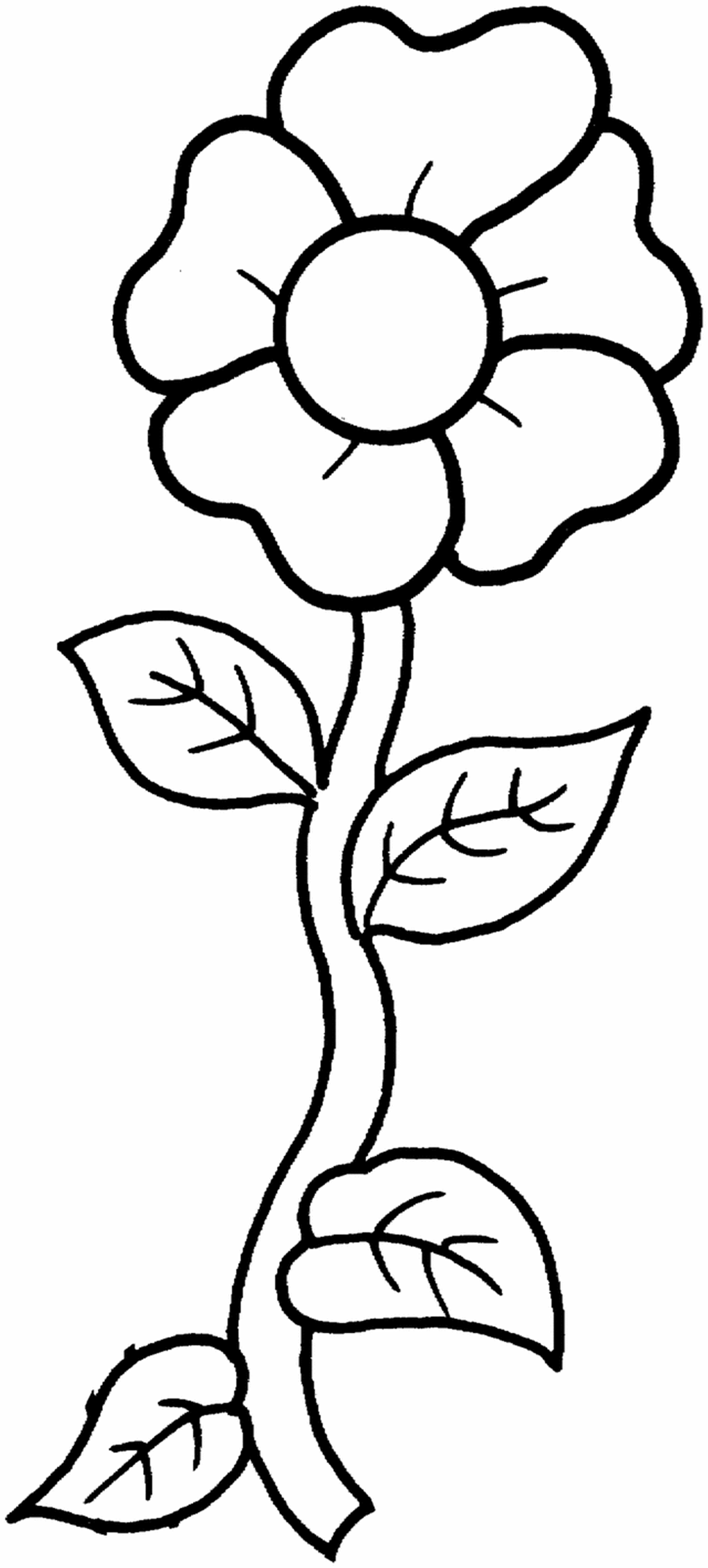 flowers outlines for colouring free printable flower coloring pages for kids  best for outlines flowers colouring