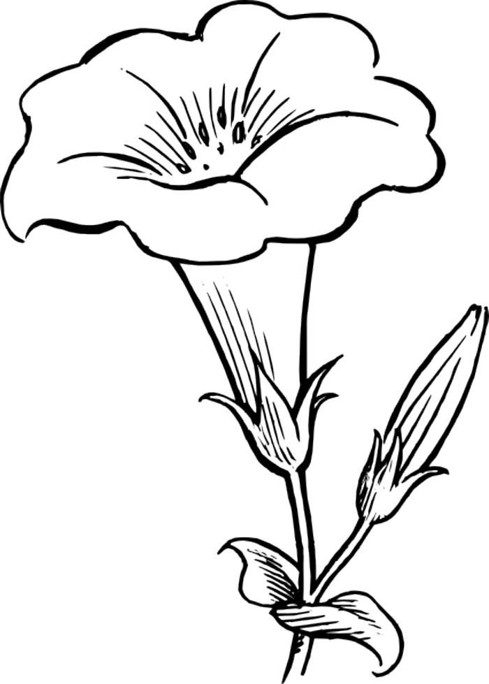 flowers outlines for colouring free simple flower outline download free clip art free colouring for flowers outlines