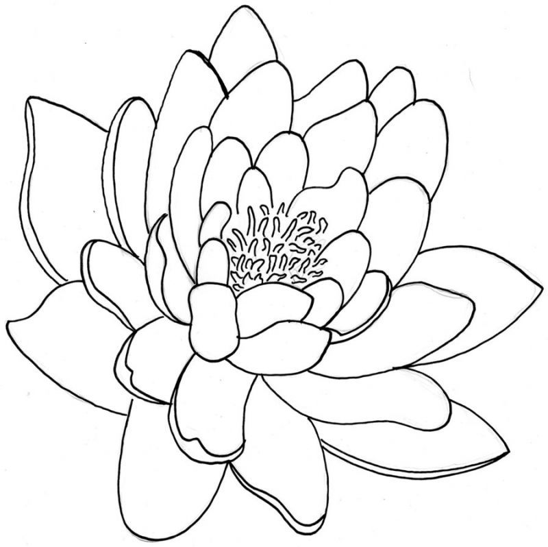 flowers outlines for colouring free simple flower outline download free clip art free flowers for outlines colouring