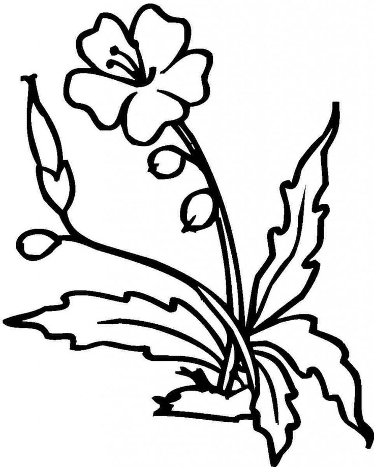 flowers outlines for colouring hawaiian flower outline free download on clipartmag for flowers colouring outlines