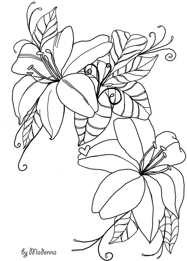 flowers outlines for colouring outlines of flowers  coloring home for outlines colouring flowers