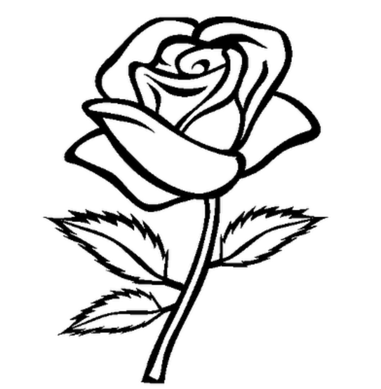 flowers outlines for colouring rose outline with stem clipart best for outlines flowers colouring