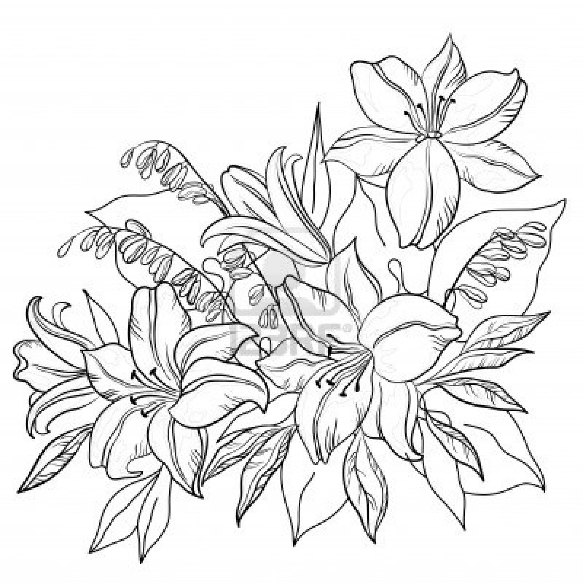 flowers outlines for colouring sunbeamflowers flowers outlines colouring for outlines flowers