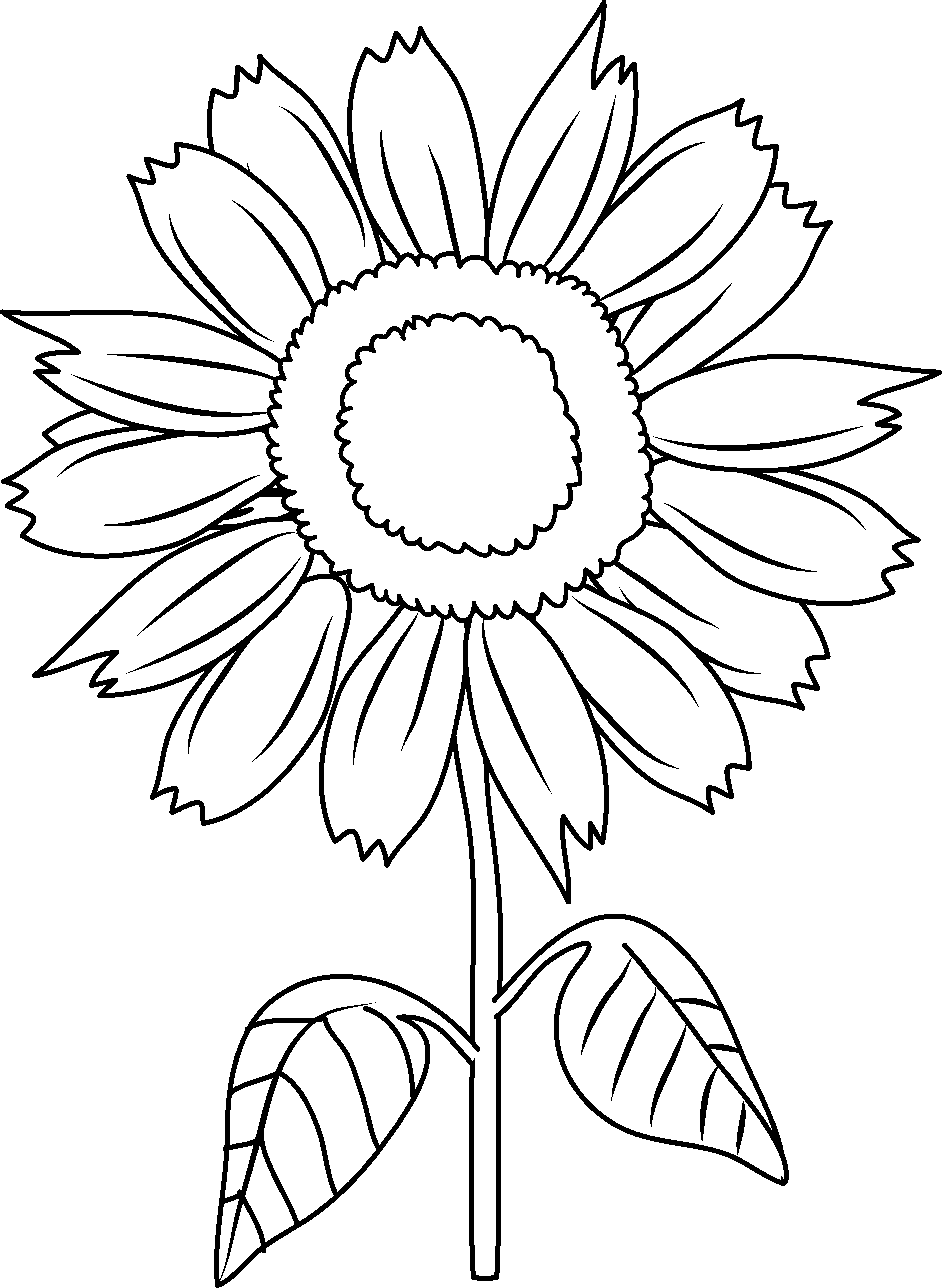 flowers outlines for colouring sunflowers clipart to color 20 free cliparts download colouring for outlines flowers