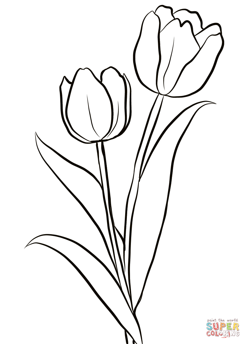 flowers outlines for colouring two tulips coloring page free printable coloring pages outlines for colouring flowers