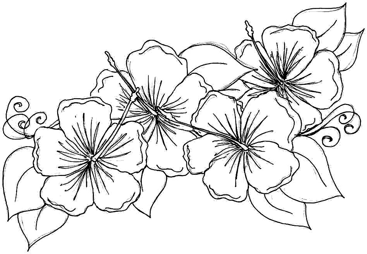 flowers to color flower coloring pages for adults best coloring pages for to flowers color