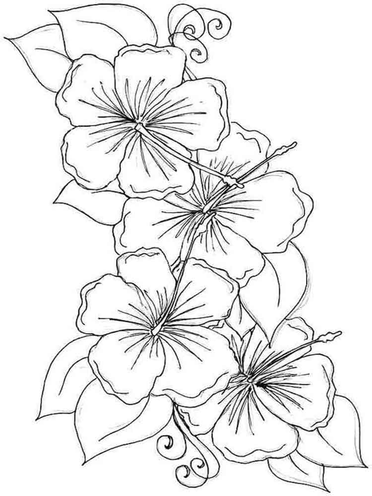 flowers to color free printable flower coloring pages for kids to color flowers