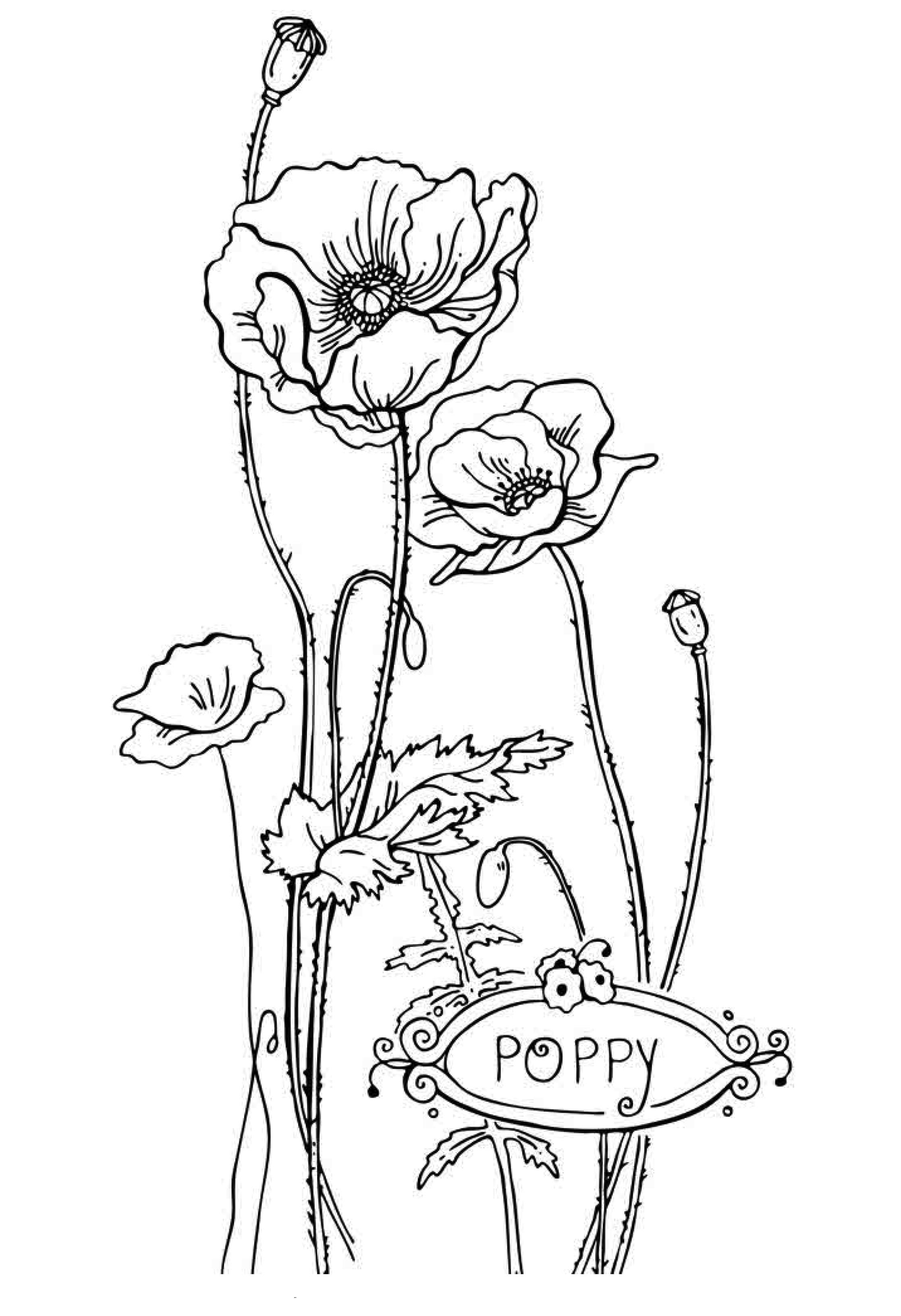 free coloring pages for kids free printable flower coloring pages for kids best for pages free kids coloring