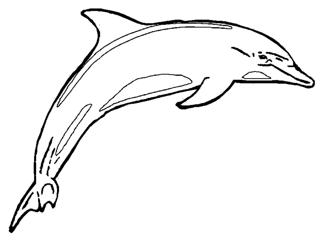 free dolphin pictures to print dolphin coloring pages download and print for free to print dolphin pictures free