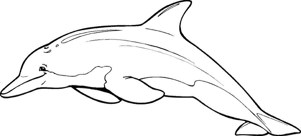 free dolphin pictures to print dolphin coloring pages free pictures to dolphin print