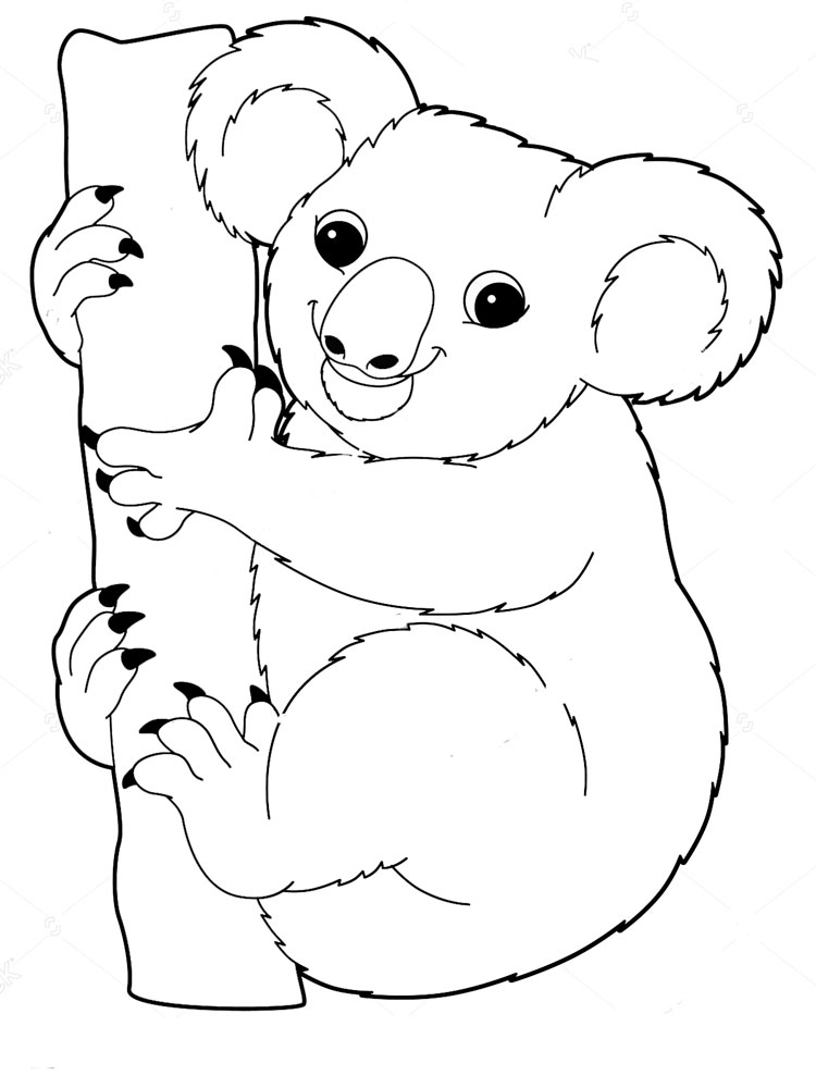free koala bear coloring pages free printable koala coloring pages for kids koala free bear coloring pages