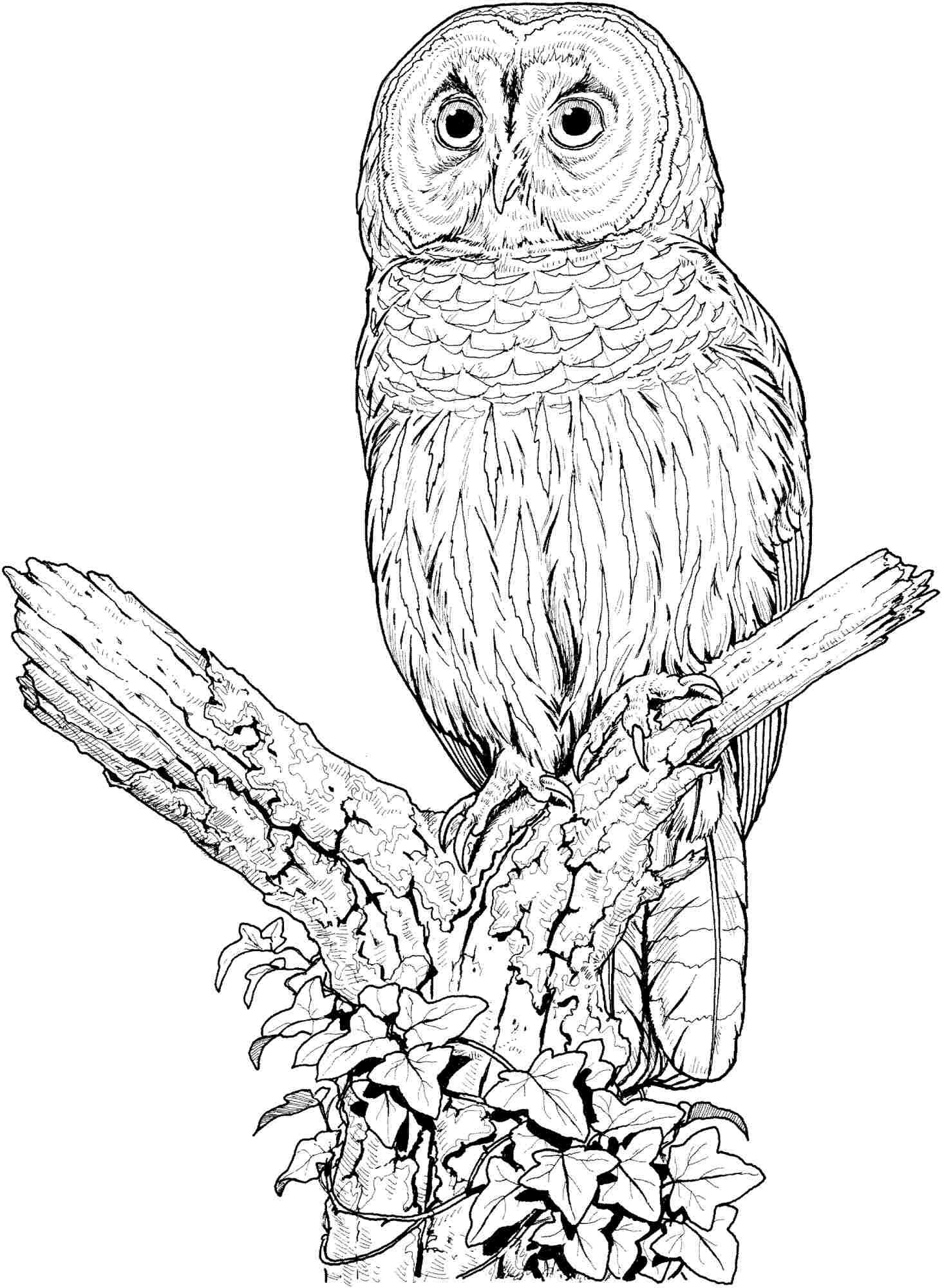 free owl printables owl coloring pages for adults free detailed owl coloring free owl printables