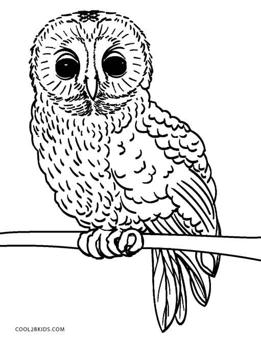 free owl printables owls animal coloring pages pictures free owl printables